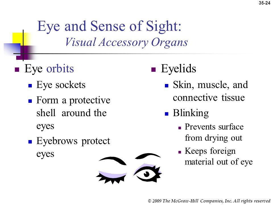 Eye and Sense of Sight: Visual Accessory Organs