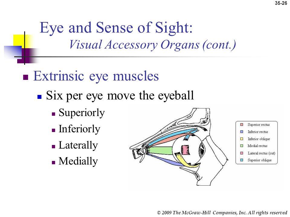 Eye and Sense of Sight: Visual Accessory Organs (cont.)