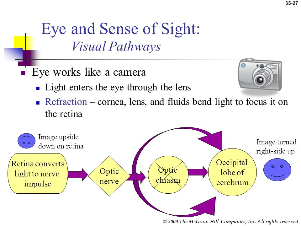 Eye and Sense of Sight: Visual Pathways