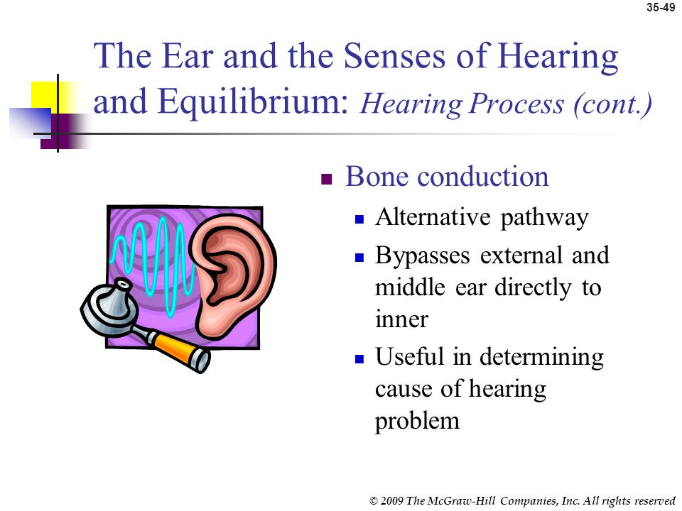 The Ear and the Senses of Hearing and Equilibrium: Hearing Process (cont.)