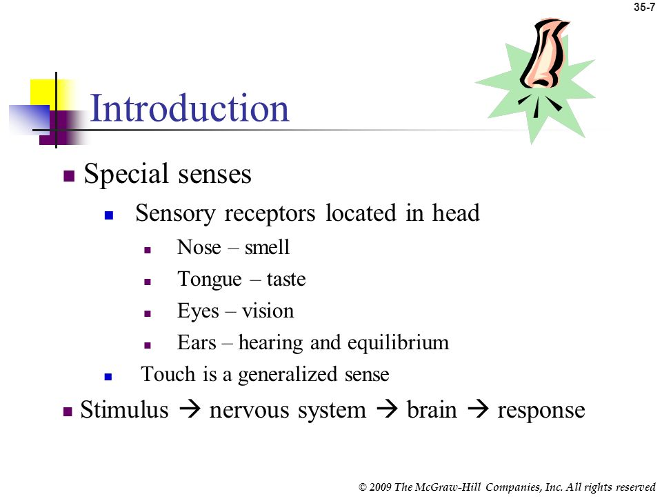 Introduction Special senses Sensory receptors located in head