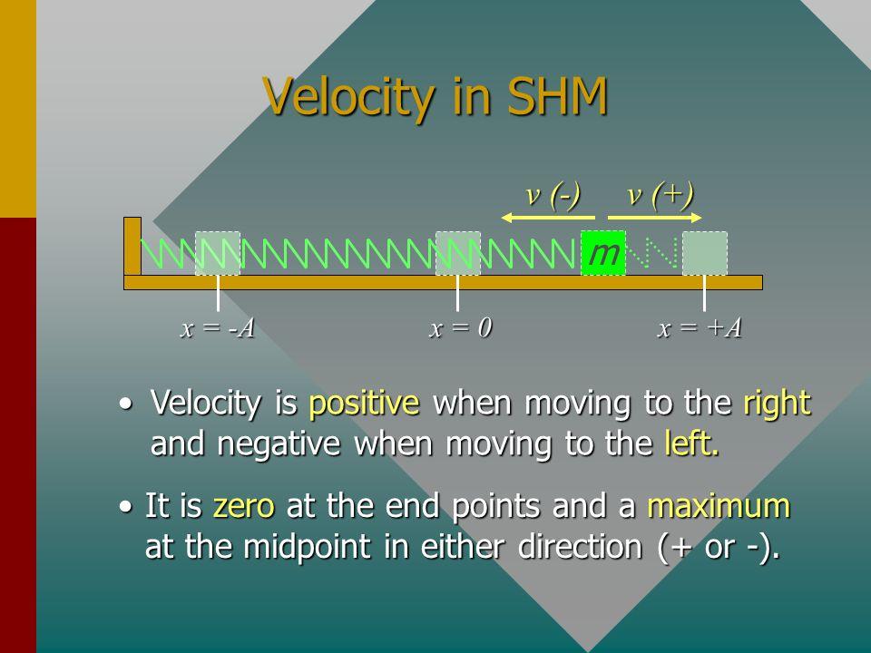 Velocity in SHM m v (-) v (+)