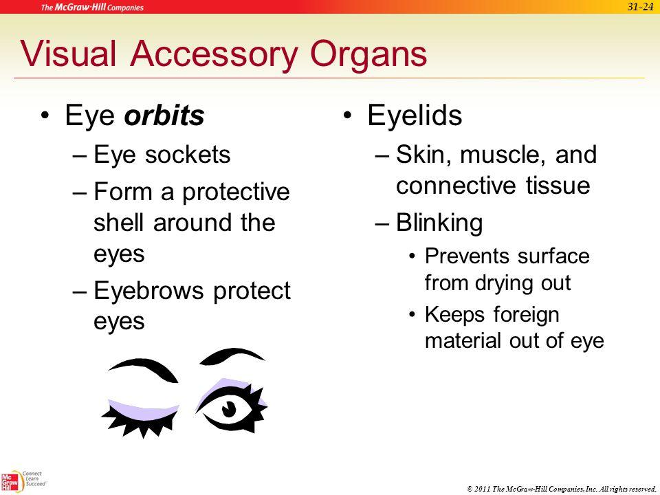 Visual Accessory Organs