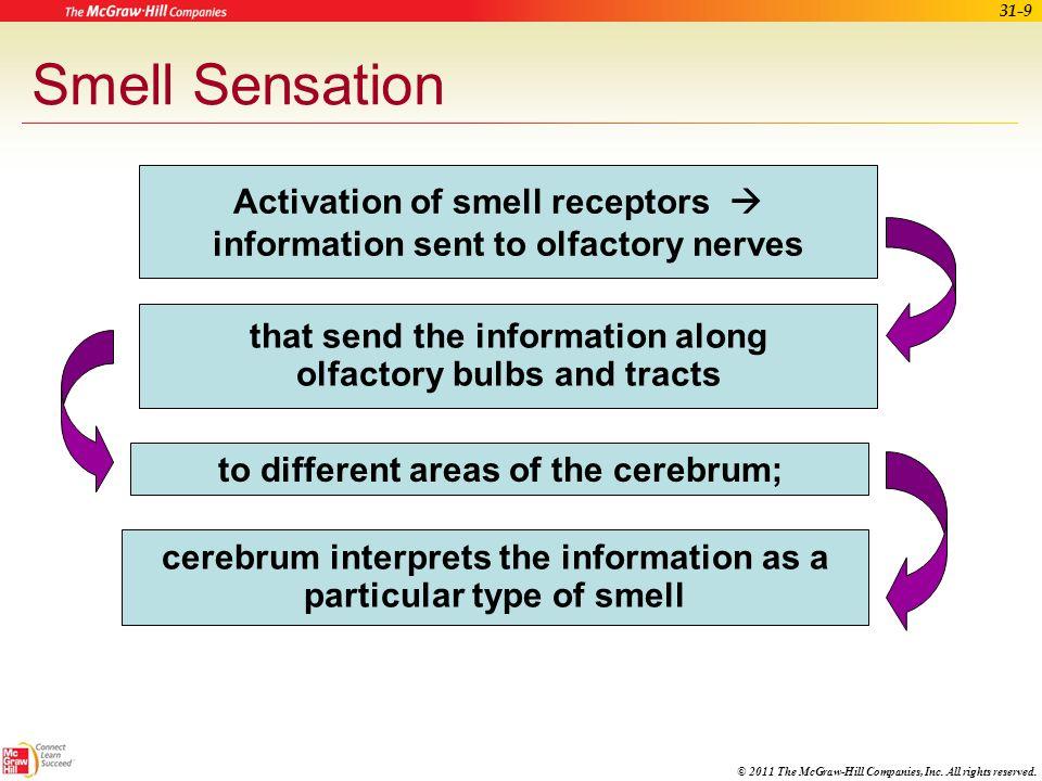 Smell Sensation Activation of smell receptors 