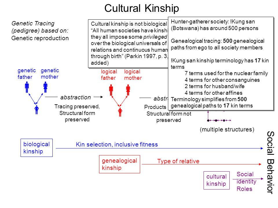 Social Issues/Kinship as a Mechanism for Social Integrating term paper 13311