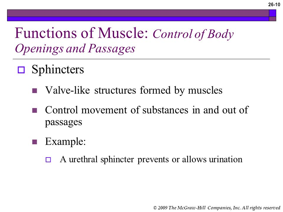 Functions of Muscle: Control of Body Openings and Passages