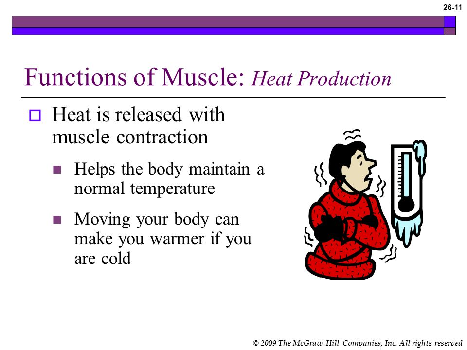 Functions of Muscle: Heat Production