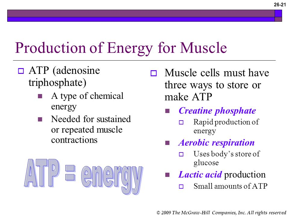 Production of Energy for Muscle