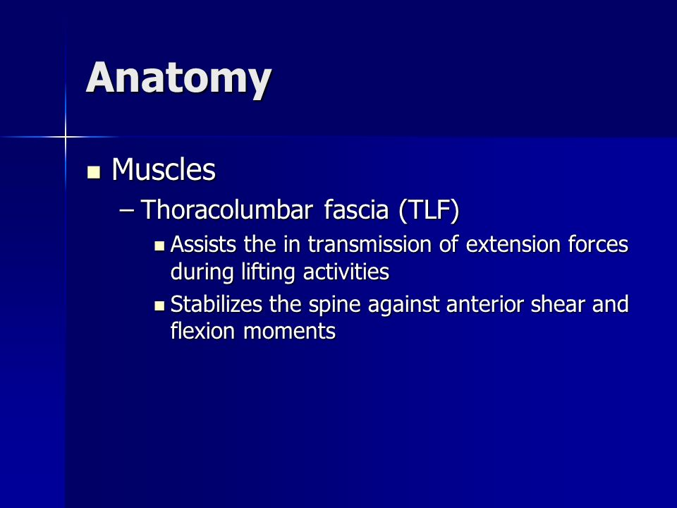 Anatomy Muscles Thoracolumbar fascia (TLF)