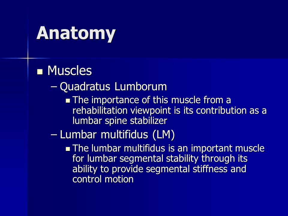 Anatomy Muscles Quadratus Lumborum Lumbar multifidus (LM)