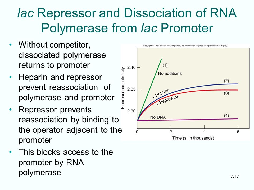 lac Repressor and Dissociation of RNA Polymerase from lac Promoter