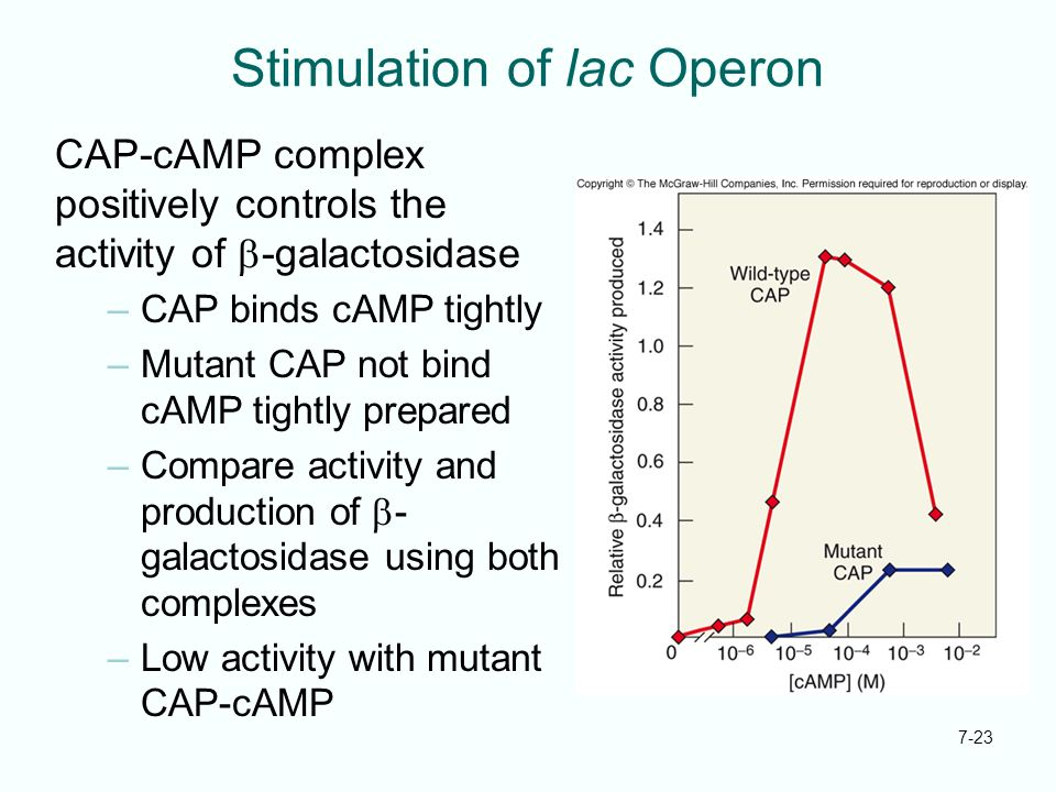 Stimulation of lac Operon