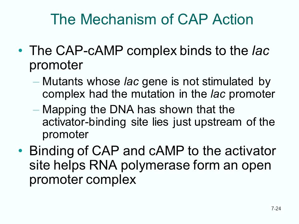 The Mechanism of CAP Action