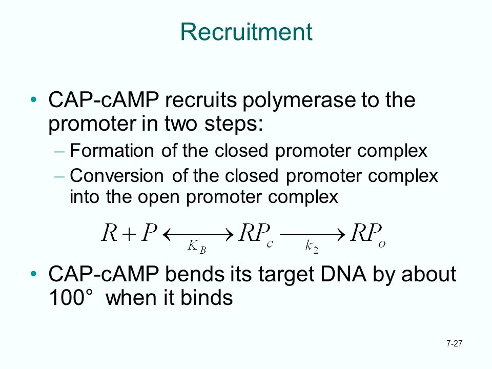 Recruitment CAP-cAMP recruits polymerase to the promoter in two steps: