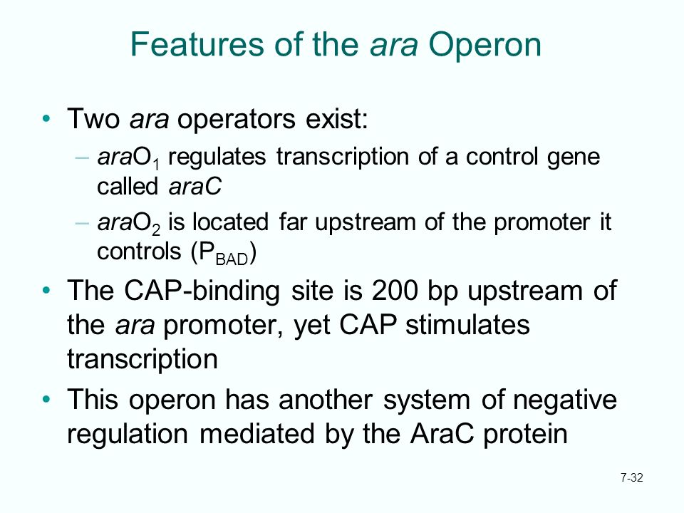Features of the ara Operon