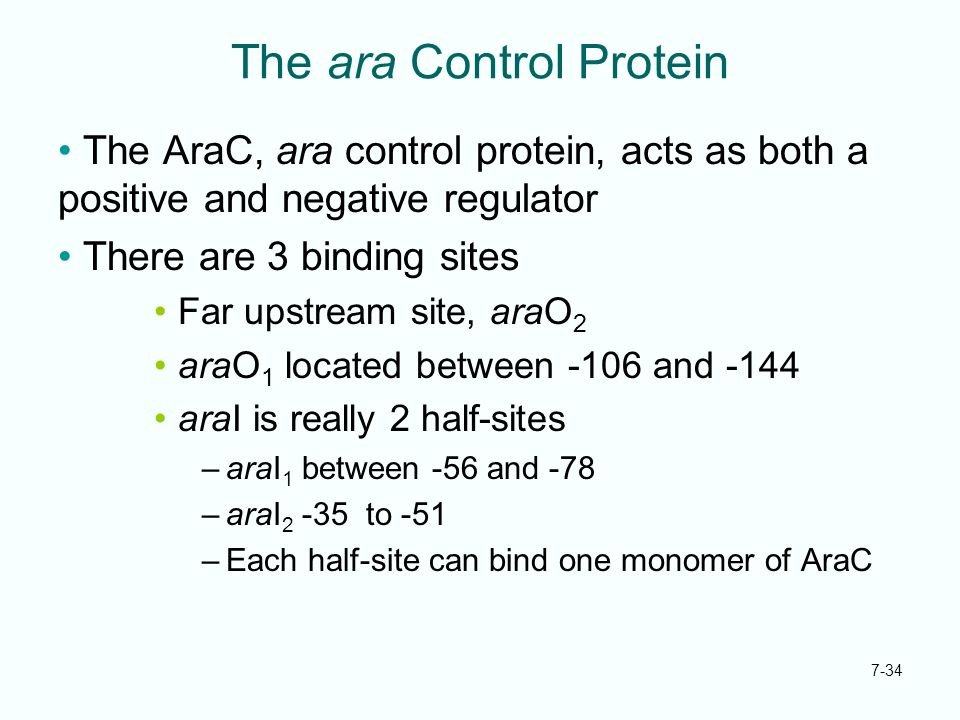The ara Control Protein