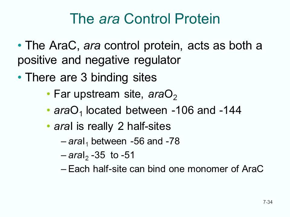 The ara Control Protein