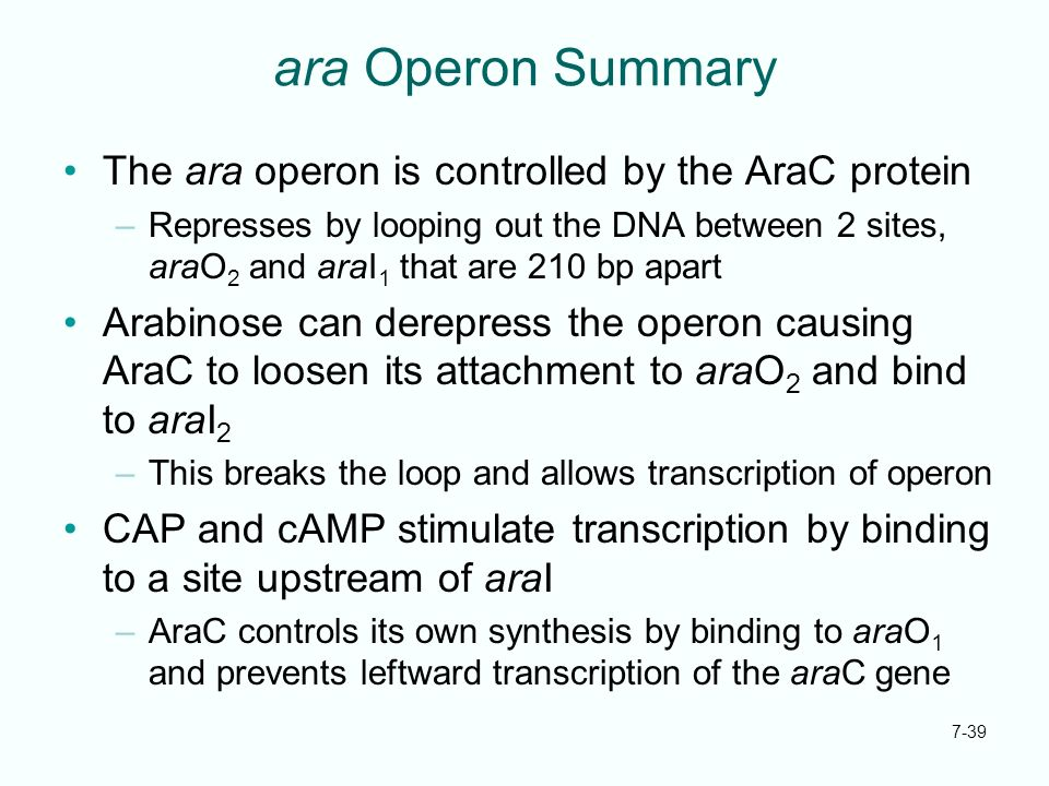 ara Operon Summary The ara operon is controlled by the AraC protein