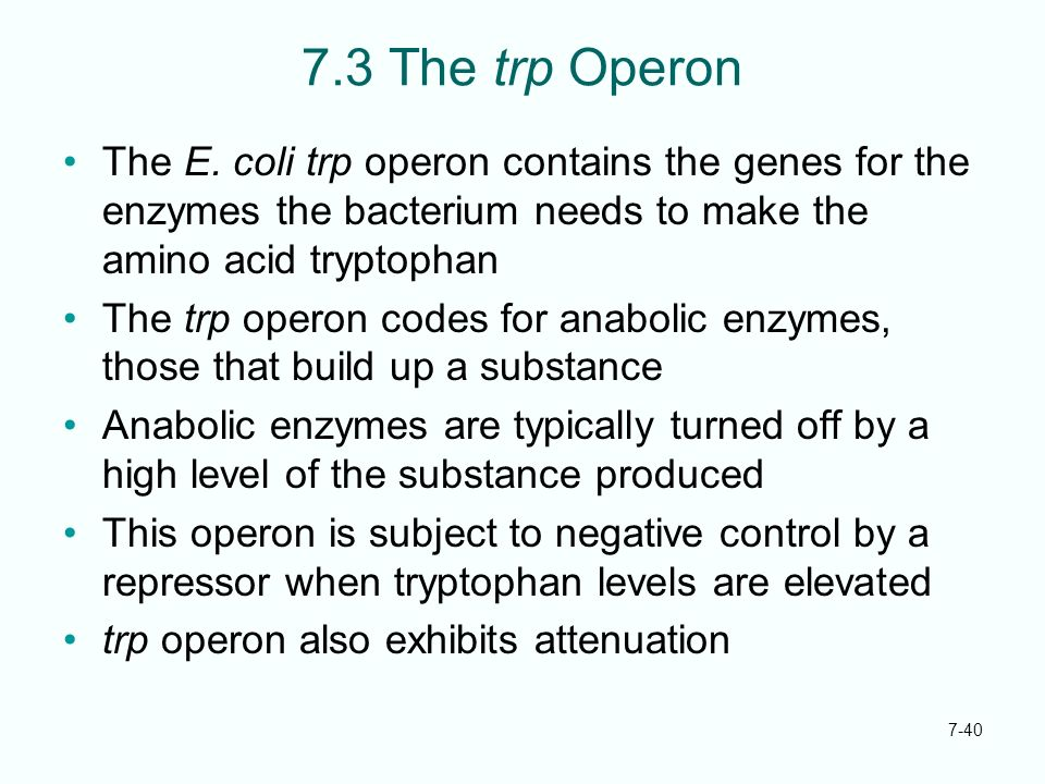 7.3 The trp Operon The E. coli trp operon contains the genes for the enzymes the bacterium needs to make the amino acid tryptophan.