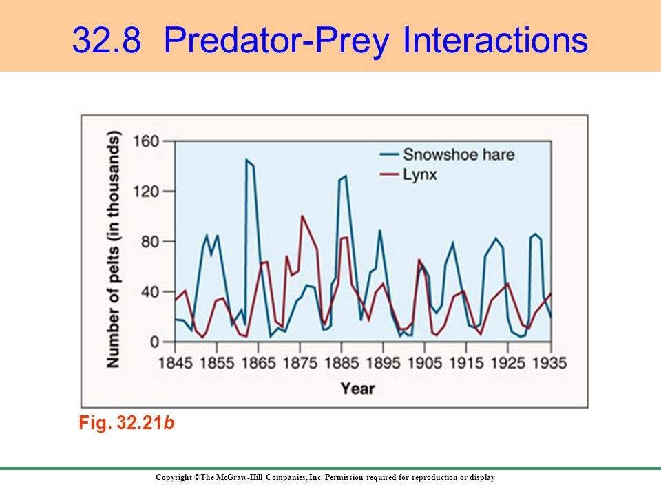 32.8 Predator-Prey Interactions