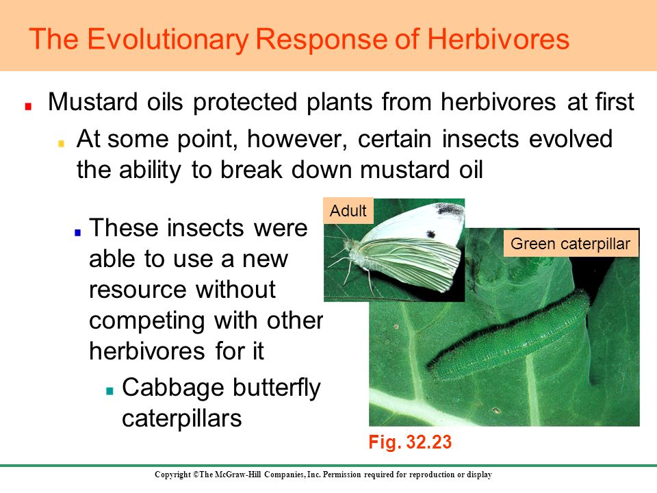 The Evolutionary Response of Herbivores