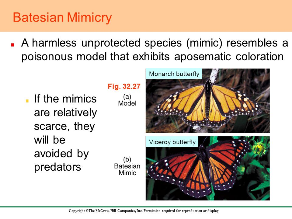 Batesian Mimicry A harmless unprotected species (mimic) resembles a poisonous model that exhibits aposematic coloration.