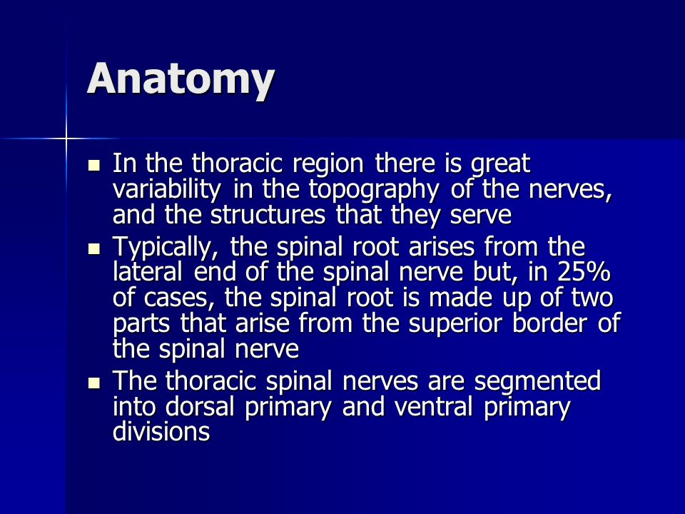 Anatomy In the thoracic region there is great variability in the topography of the nerves, and the structures that they serve.