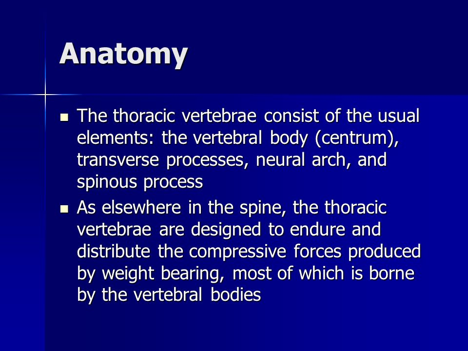 Anatomy The thoracic vertebrae consist of the usual elements: the vertebral body (centrum), transverse processes, neural arch, and spinous process.