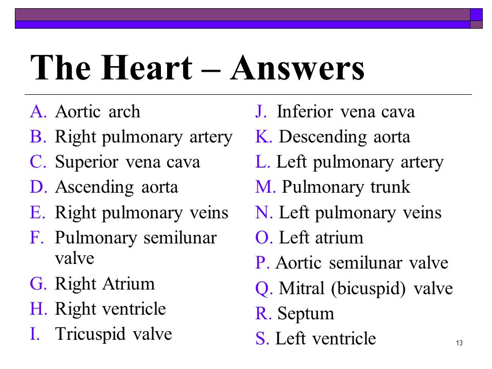 The Heart – Answers Aortic arch Right pulmonary artery