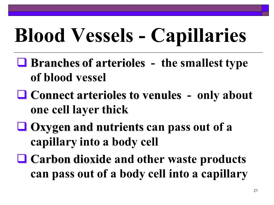 Blood Vessels - Capillaries