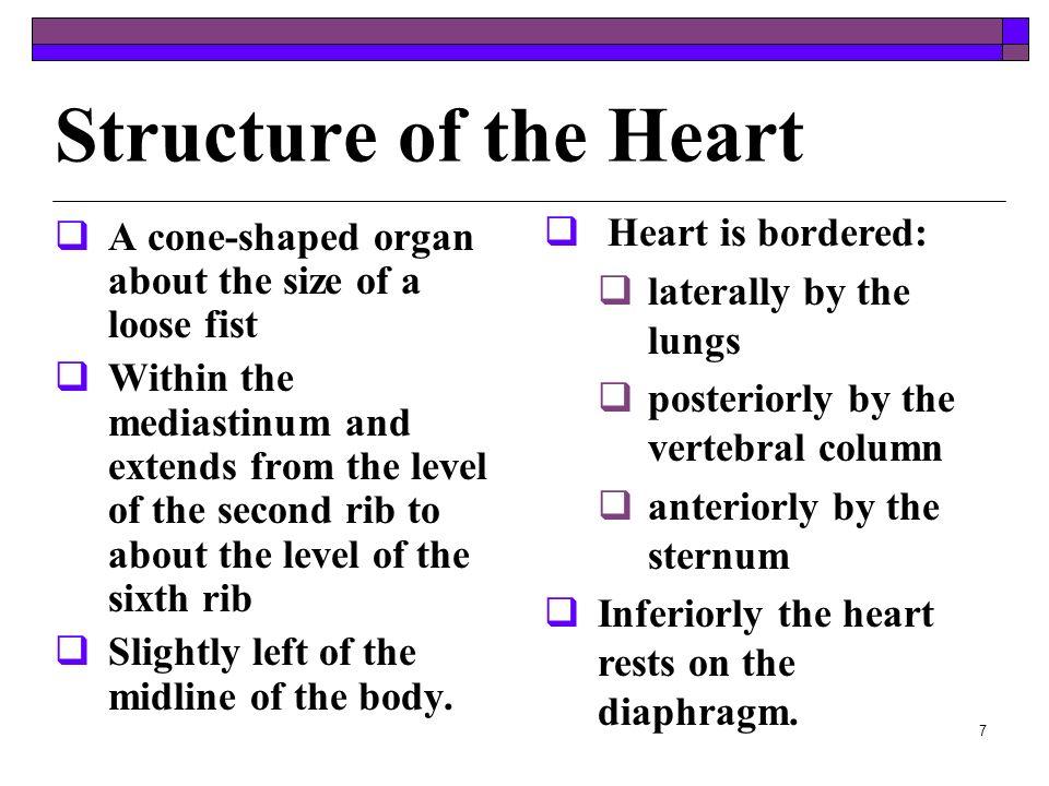 Structure of the Heart Heart is bordered: