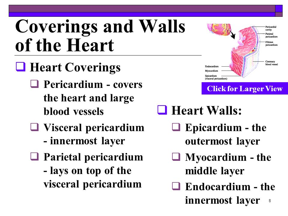 Coverings and Walls of the Heart