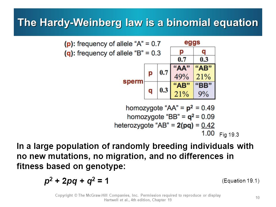 The Hardy-Weinberg law is a binomial equation