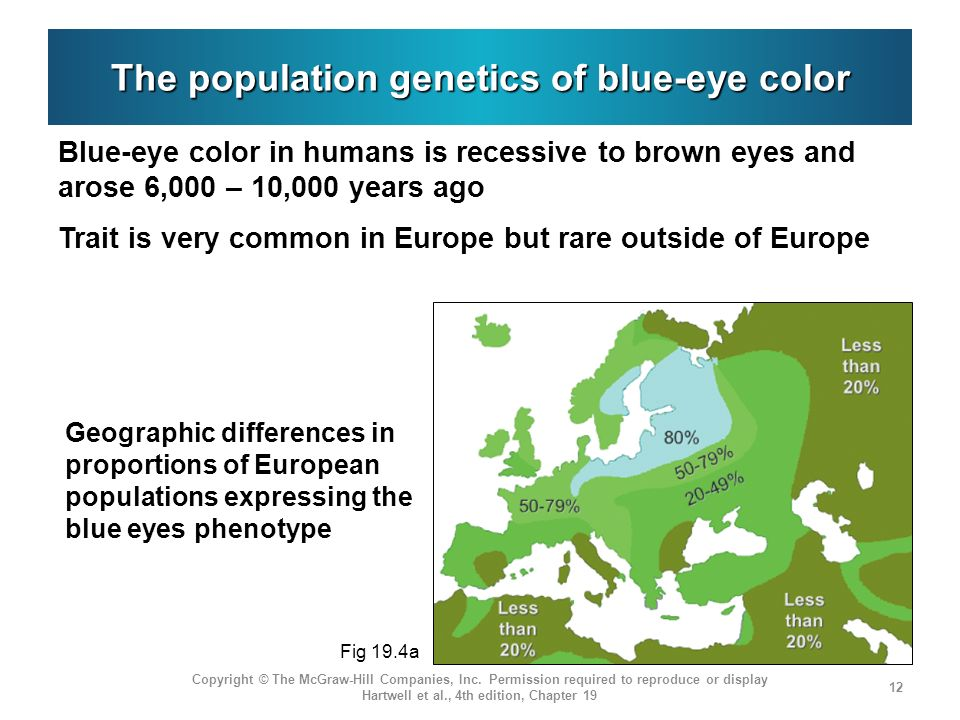 The population genetics of blue-eye color