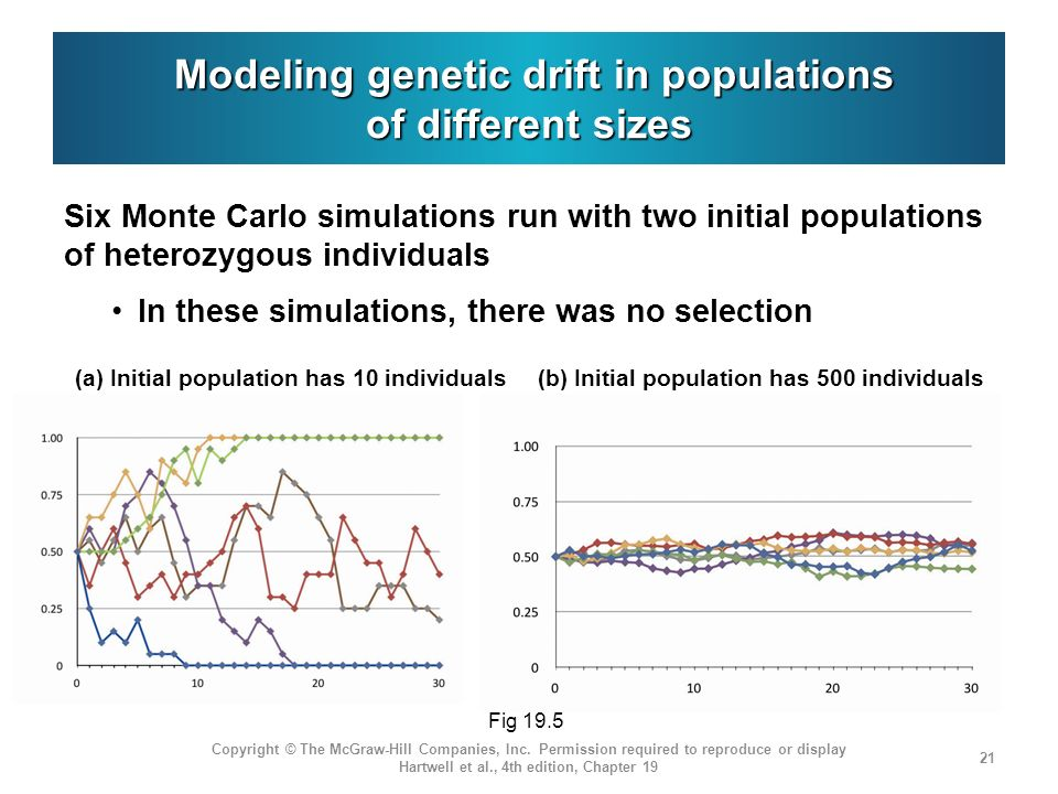 Modeling genetic drift in populations of different sizes