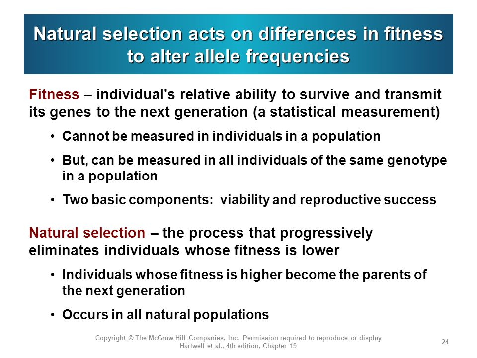 Natural selection acts on differences in fitness to alter allele frequencies