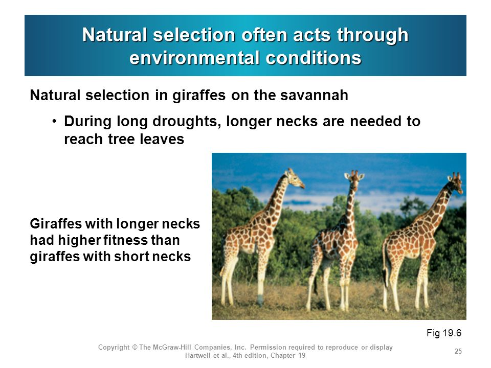 Natural selection often acts through environmental conditions