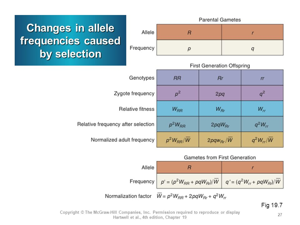 Changes in allele frequencies caused by selection