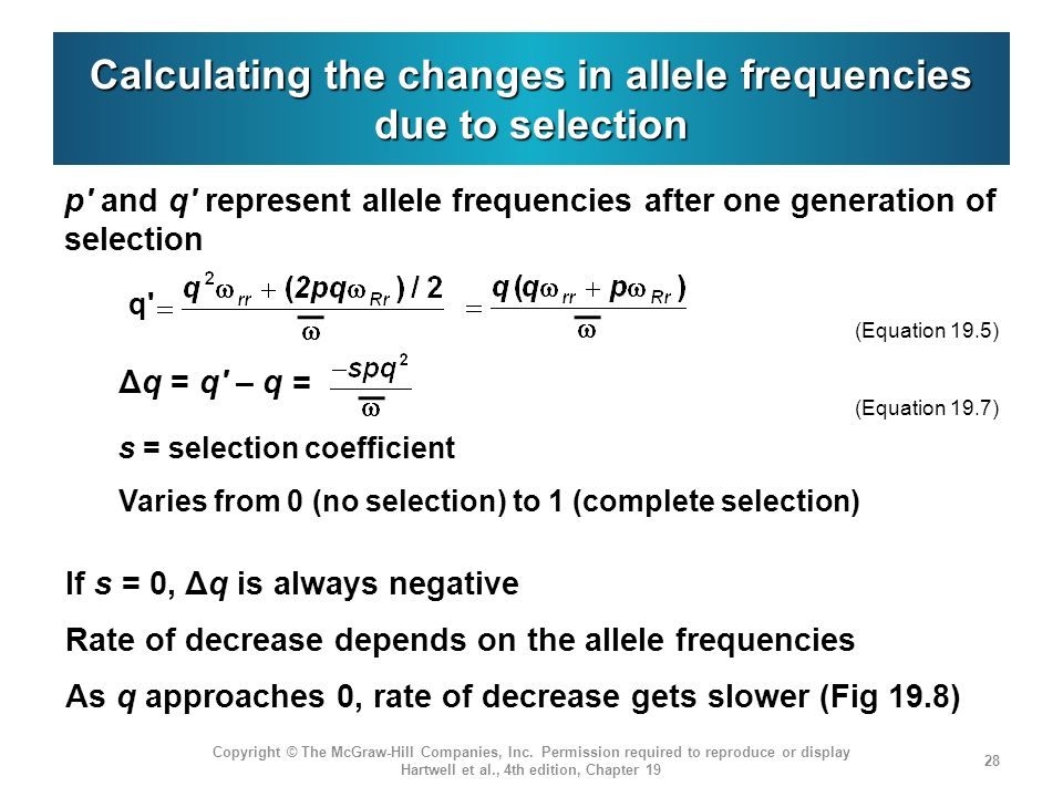 Calculating the changes in allele frequencies due to selection