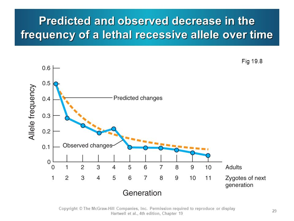 Predicted and observed decrease in the frequency of a lethal recessive allele over time
