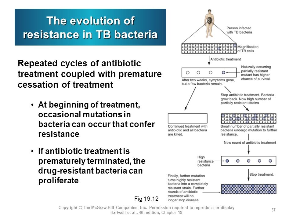 The evolution of resistance in TB bacteria