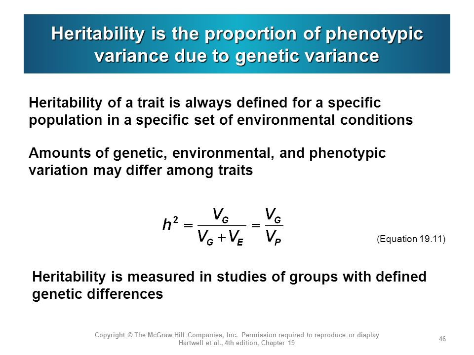 Heritability is the proportion of phenotypic variance due to genetic variance
