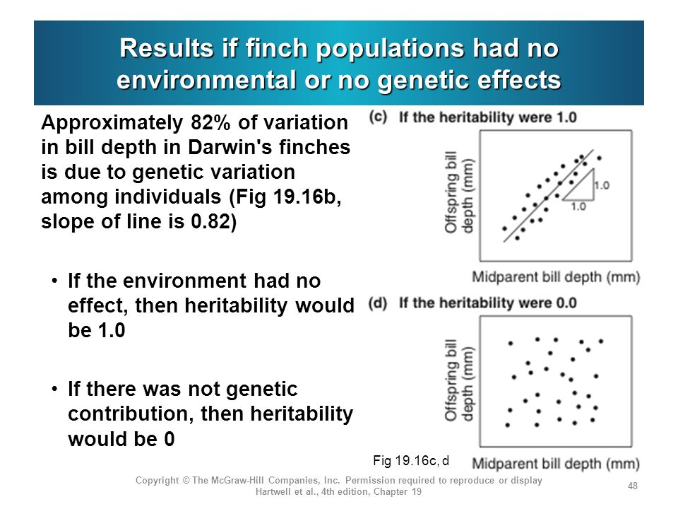 Results if finch populations had no environmental or no genetic effects