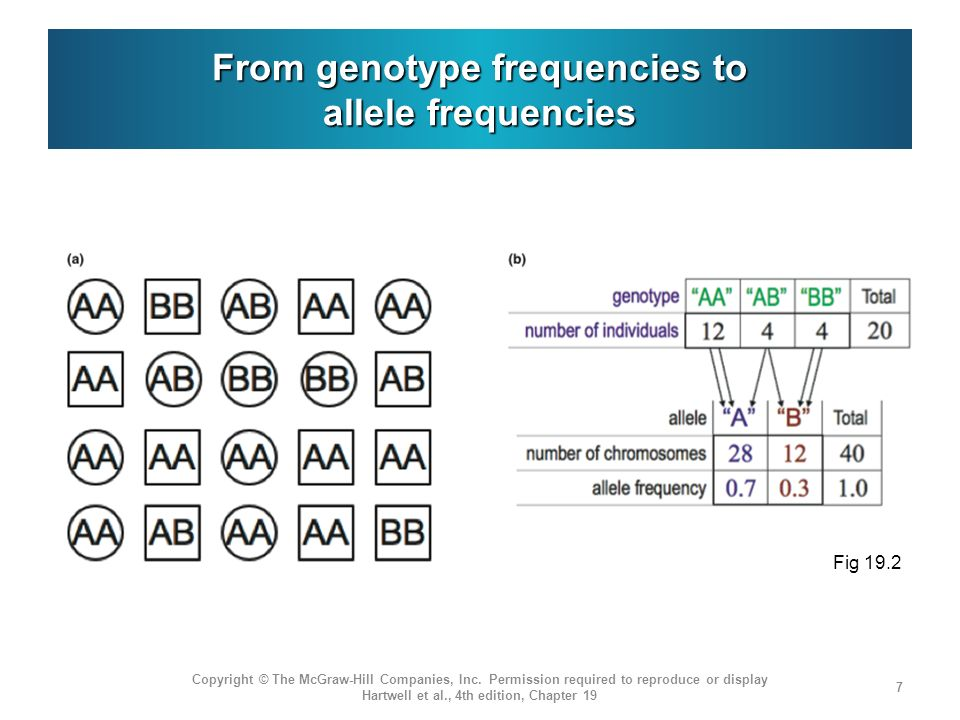 From genotype frequencies to allele frequencies