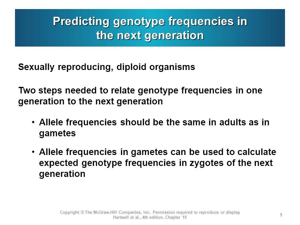 Predicting genotype frequencies in the next generation