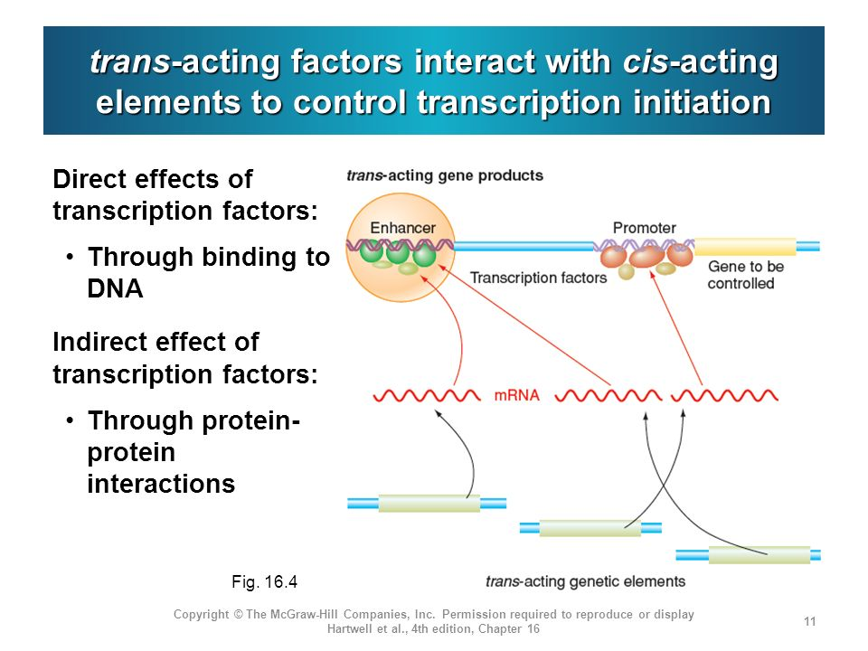 trans-acting factors interact with cis-acting elements to control transcription initiation
