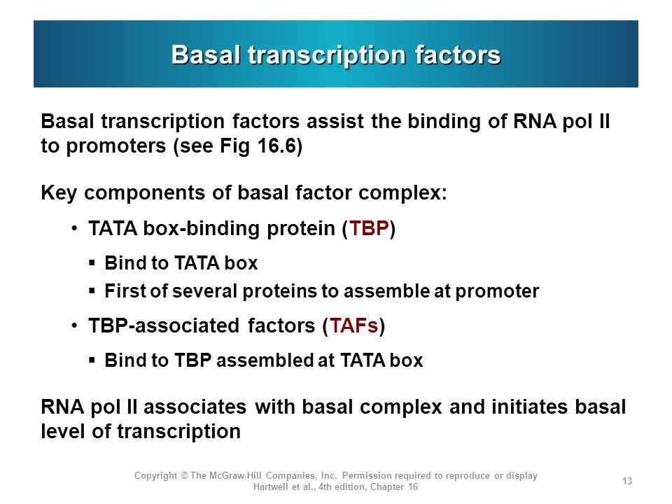 Basal transcription factors