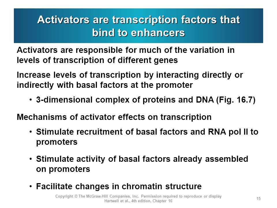Activators are transcription factors that bind to enhancers