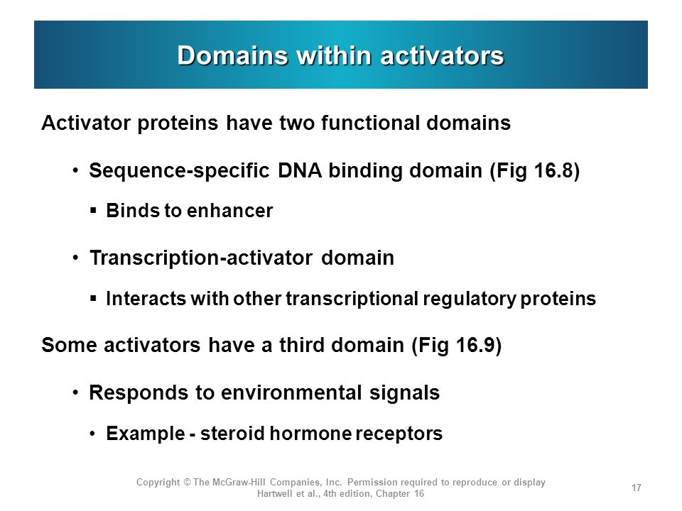 Domains within activators