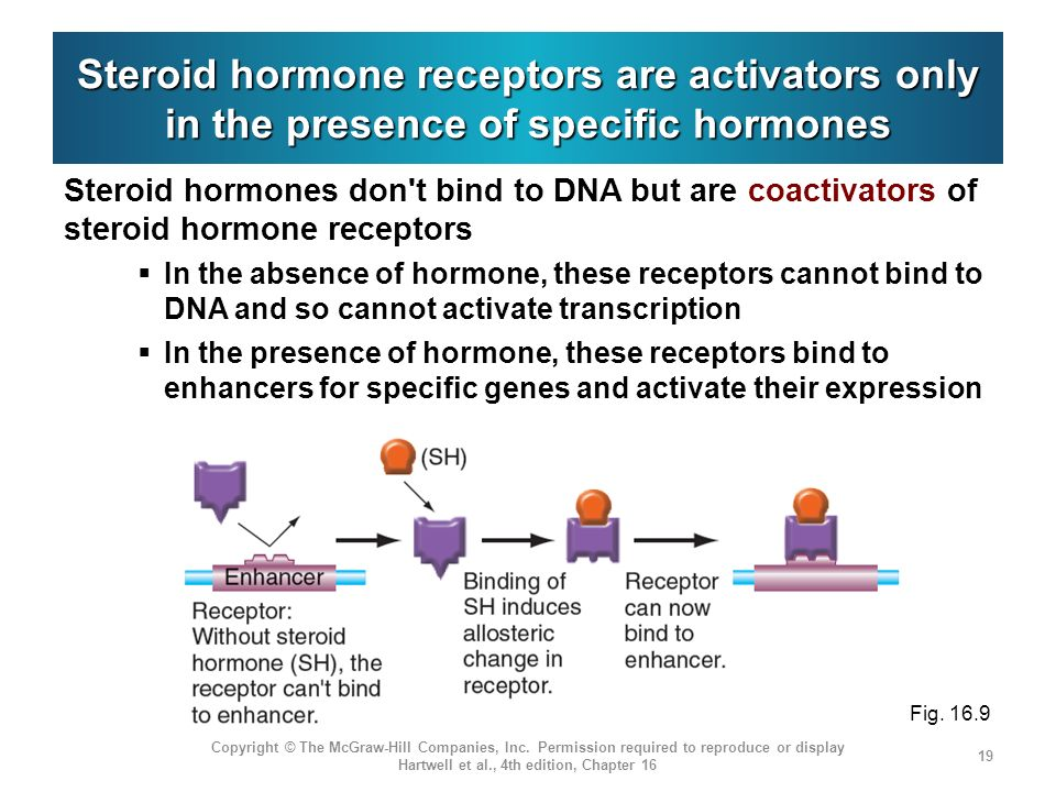 Steroid hormone receptors are activators only in the presence of specific hormones